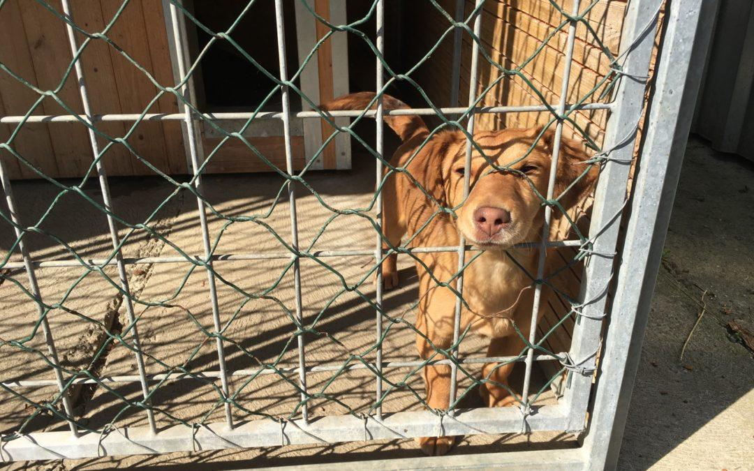 """I zatoulaní pejsci chtějí mít svůj komfort -""""Návštěva psího útulku vUherském Hradišti"""""""