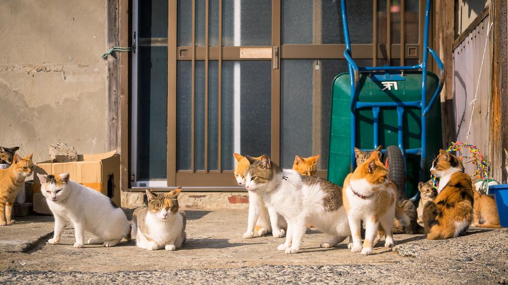 Útulky praskají ve švech. Proč kastrovat kočky?