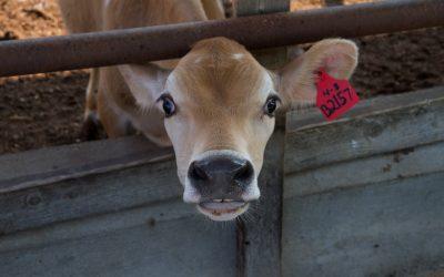 """Dnes je mezinárodní den """"STOP přepravě zvířat"""""""